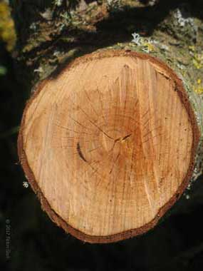 I TIPI DI LEGNO: guida alle caratteristiche dei legnami italiani