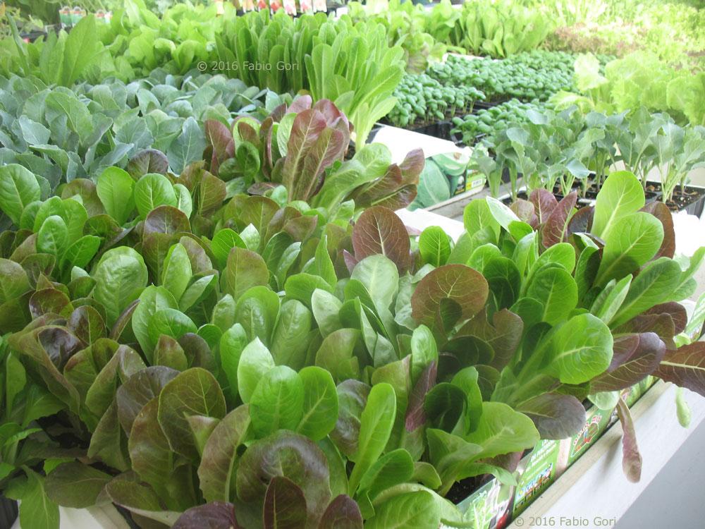 Orto sul balcone sul terrazzo in casa in giardino for Vendita piante orto